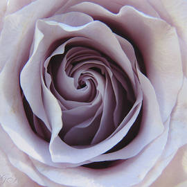 A Rose for Annie - Floral Photography and Art - Roses - Single Rose Macro by Brooks Garten Hauschild