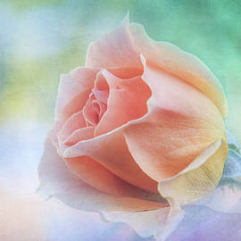 A Rose Gift by Terry Davis