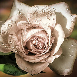 A Rose Is A Rose by Donna Kennedy