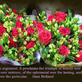 A Rose is An Argument by David Zimmerman