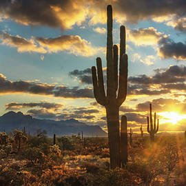 A Saguaro Sunrise In The Sonoran  by Saija Lehtonen