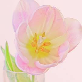 A Single Tulip Blossom in a Vase by Derrick Neill