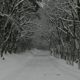 A Snowy Road Less Travelled by Leslie Struxness