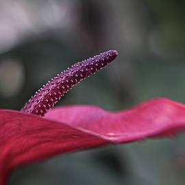 A Soft Focus Flower by Barbara Elizabeth