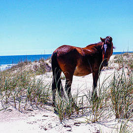 A Spanish Mustang on the Outer Banks by Broken Soldier