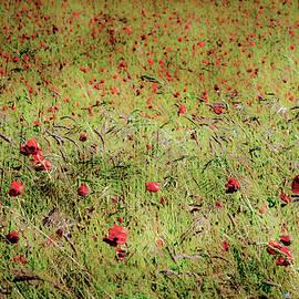 A Splash of Red by Jim Key