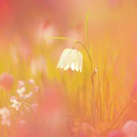 A Spring Bouquet - Fritillaria meleagris by Roeselien Raimond
