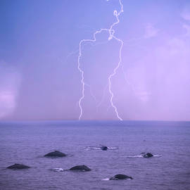 A Storm Approaches a Pod of Humpback Whales by Derrick Neill