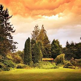 A Strange Evening in my Garden by Slawek Aniol