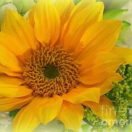A Sunflower in Winter by Dora Sofia Caputo