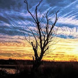 A Sunset Snag by Karen Silvestri