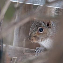A Thinking Squirrel by Lieve Snellings
