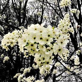 A Time For Blossoms by Debra Lynch