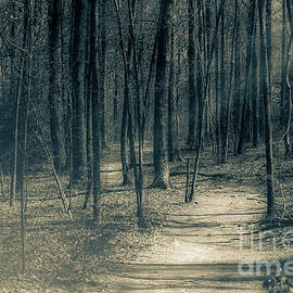 A Trail In The Forest by Floye Wolfe