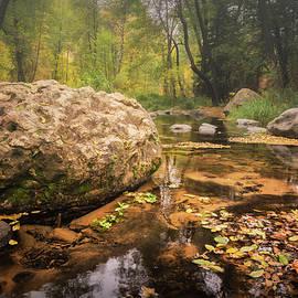 A Walk Along The Creek  by Saija Lehtonen