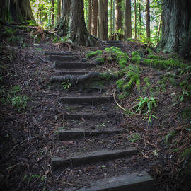 A Walk In Th Redwood Forest by Mitch Shindelbower