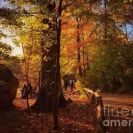 A Walk in the Woods - Autumn in New York by Miriam Danar