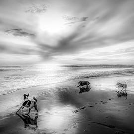 A Wet Dog is a Happy Dog in BW by Christina Ford