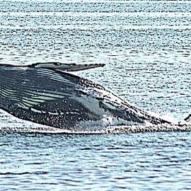 A Whale Of A Time by John Hughes Photographic