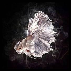 A White Betta Fish Portrait by Scott Wallace Digital Designs