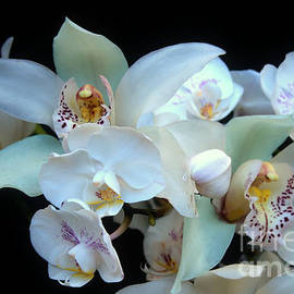 A White Orchid Wedding by Michael May