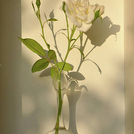 A White Rose To Tend by Gali-Dana Singer