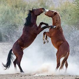 A Wild Tango by Cathy Franklin