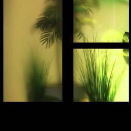 A Window of a Flower Shop by Imi Koetz