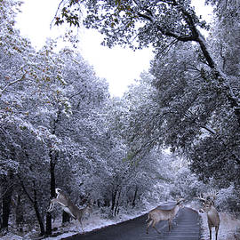 A Winter Backroad Crossing by Three Deer, Cave Creek, AZ, USA by Derrick Neill