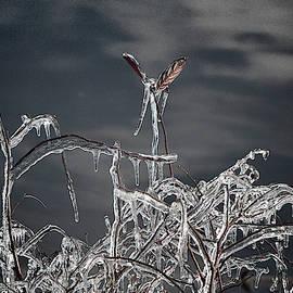 A Winter Bouquet by Yuri Lev
