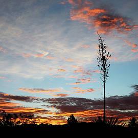 A Yucca Silhouette at Twilight, Palominas, AZ, USA by Derrick Neill