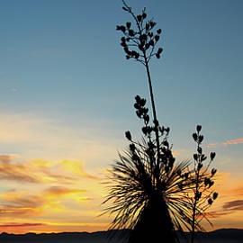 A Yucca Silhouette, Mule Mountains, Palominas, AZ, USA by Derrick Neill