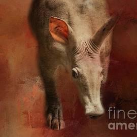 Aardvark by Eva Lechner