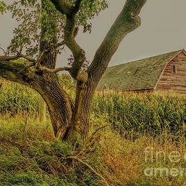 Abandoned Barn Behind the Corn by Curtis Tilleraas