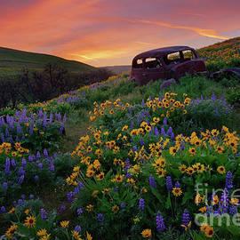 Abandoned Rusty Car in Flower Field in Columbia Gorge by Tom Schwabel