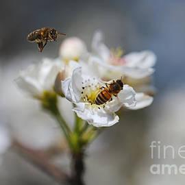 About To Land Nashi Flower by Joy Watson
