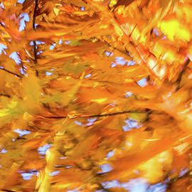Abstract Autumnal Harmony - Bold Free Form Motion in a Yellow Oak Tree Crown by Georgia Mizuleva