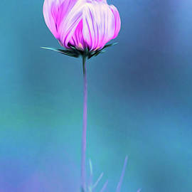 Abstract Cosmos Bloom About To Open by Anita Pollak