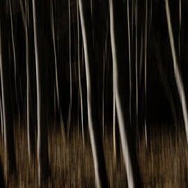 Abstract Forest - Fine Art Photography Print by Martin Vorel Minimalist Photography