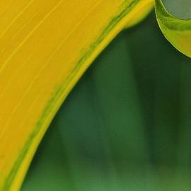 Abstract Gold And Green by Alida M Haslett