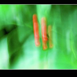 Abstract nature  - 7059 by Panos Pliassas