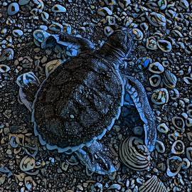 Abstract Patterned Baby Flatback Turtles Two OF Two by Joan Stratton