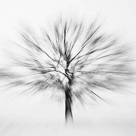 Abstract tree by Martin Vorel Minimalist Photography
