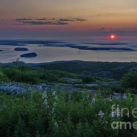 Acadia Sunrise 2 by Dale Kohler