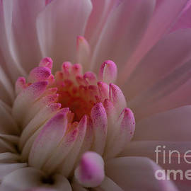 Accents of Pink by Linda Howes