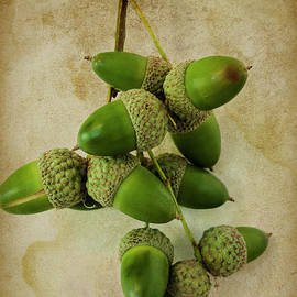 Acorns by Elaine Teague