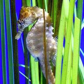 Adventure Aquarium - 1 by Arlane Crump