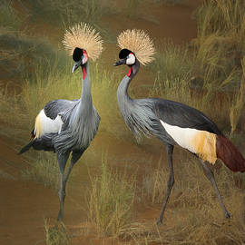 African Crowned Cranes by Spadecaller