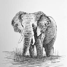 African Elephant by Uma Krishnamoorthy