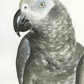 African Grey by Taphath Foose